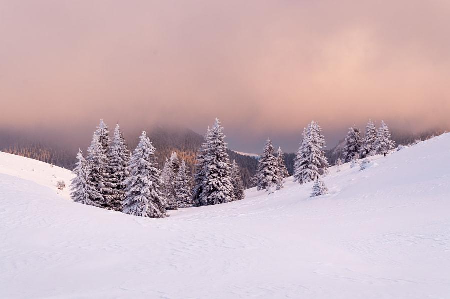 Purple snow, автор — Marcel Ilie на 500px.com