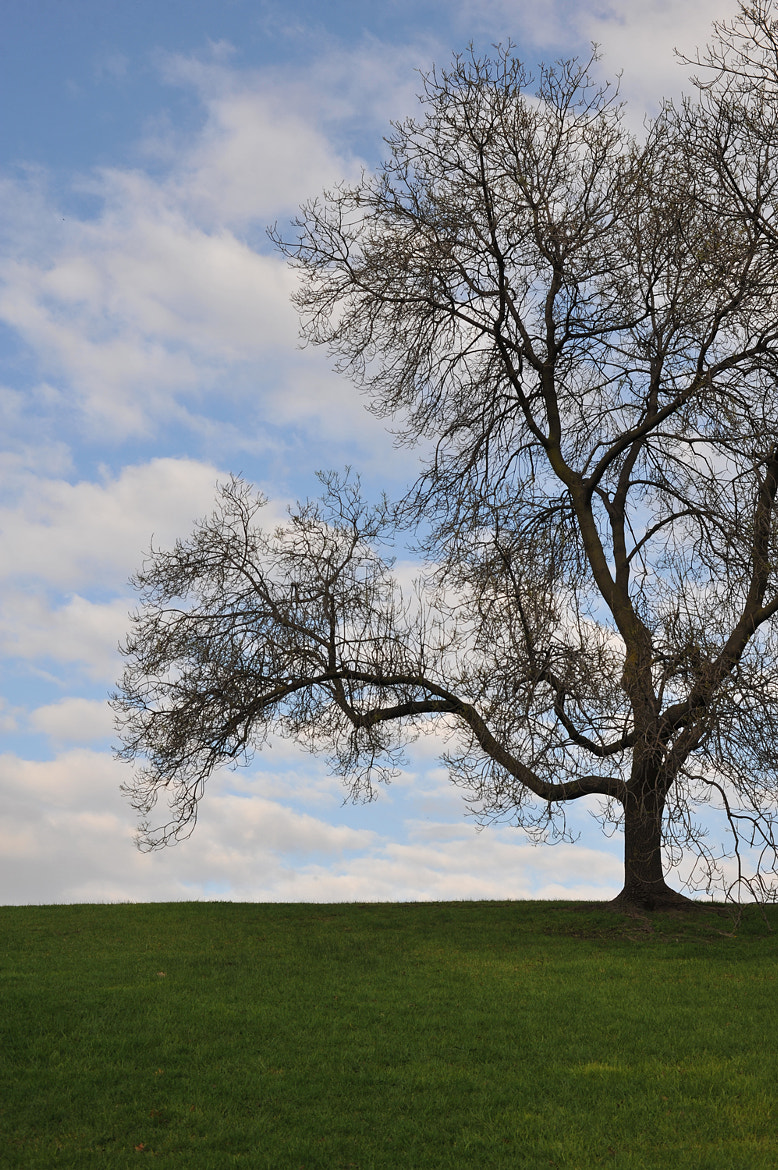 Photograph Tree on the Hill by Mark  on 500px