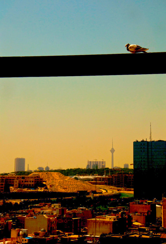 Photograph Pigeon by Shayan Es on 500px