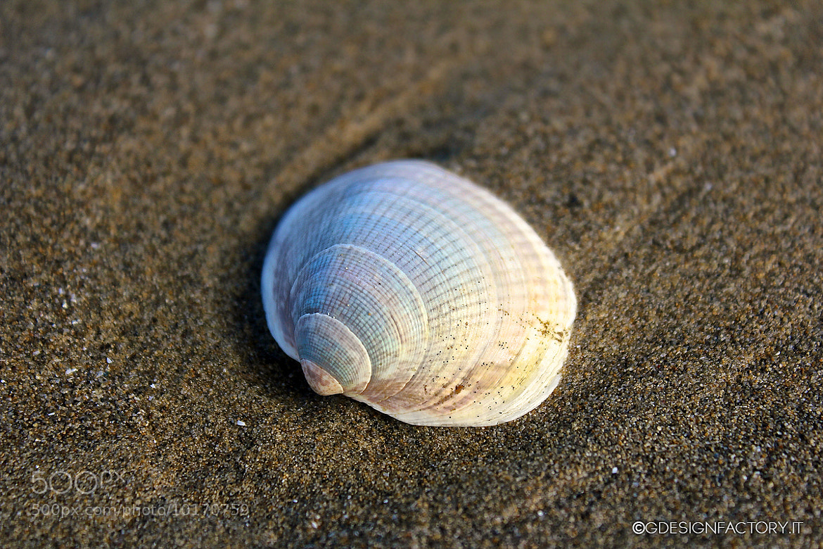 Photograph Shell on sand by Virginio Perissinotto on 500px