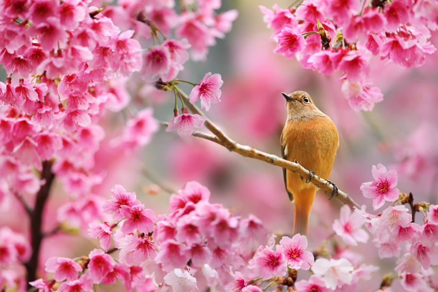 Spring Poetry by Sue Hsu on 500px.com