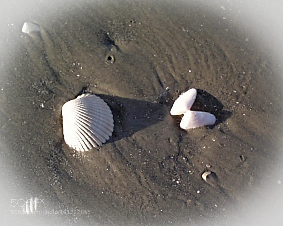 two seashells on the beach by greg mikesell