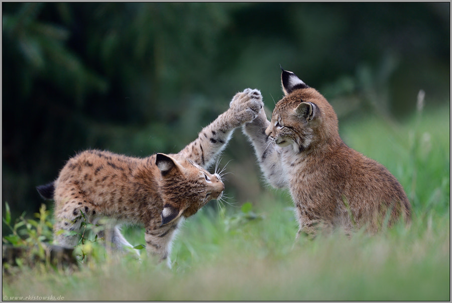 Photograph High five... by www.wonderful-earth.net  on 500px