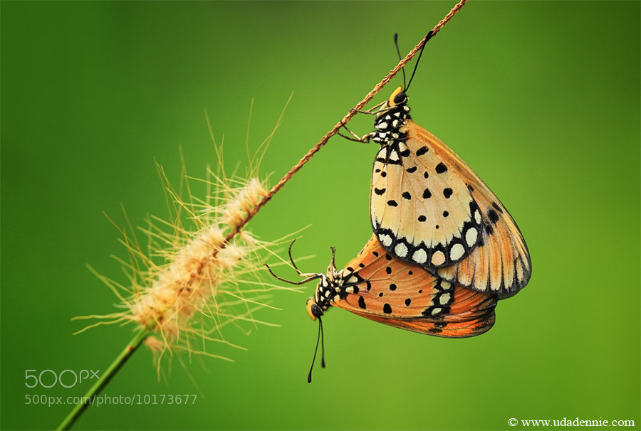 Photograph Mating by Uda Dennie on 500px