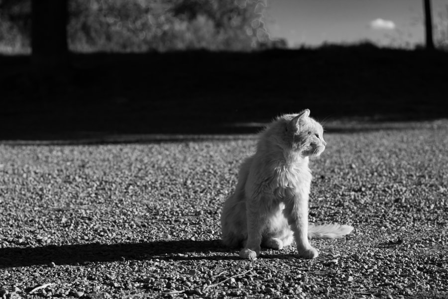 Cat on sun by Juanjo Rueda on 500px.com