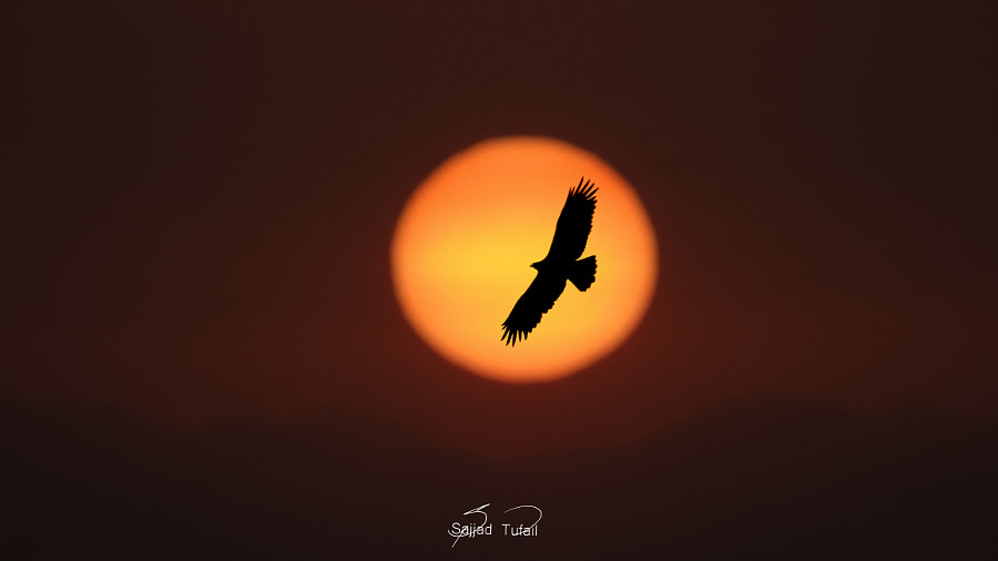 Rising Sun & Eagle above Himalayas    by Sajjad Tufail on 500px.com