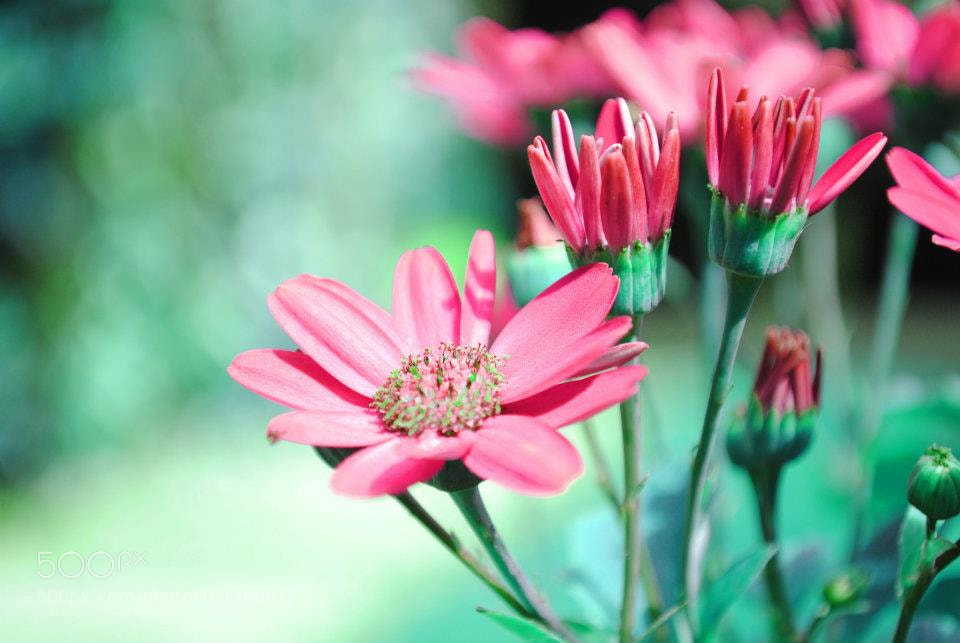 Photograph flowers by katie hand on 500px