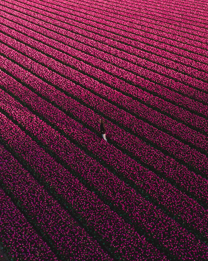 Surrounded by pink by Mike Tesselaar on 500px.com