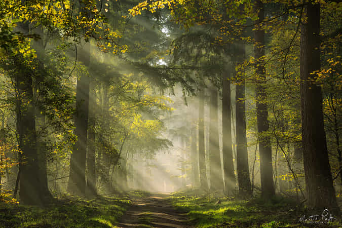 Your daily dose of sunlight by Martin Podt
