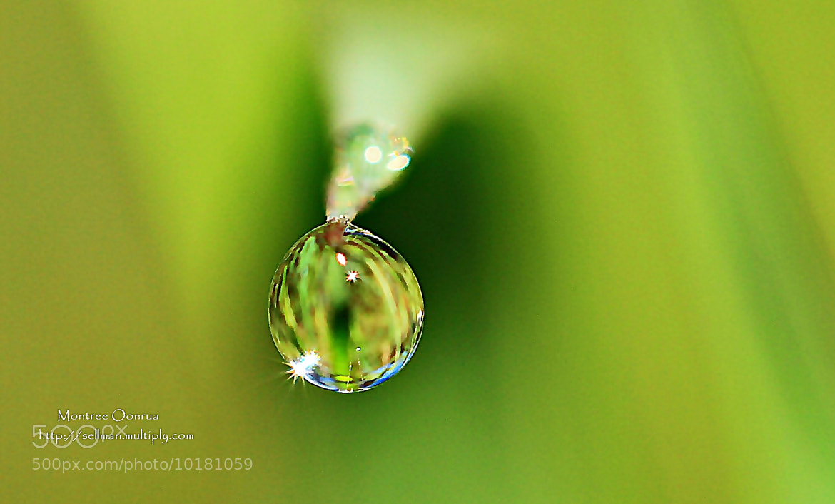 Photograph Dew. by Montree Oonrua on 500px