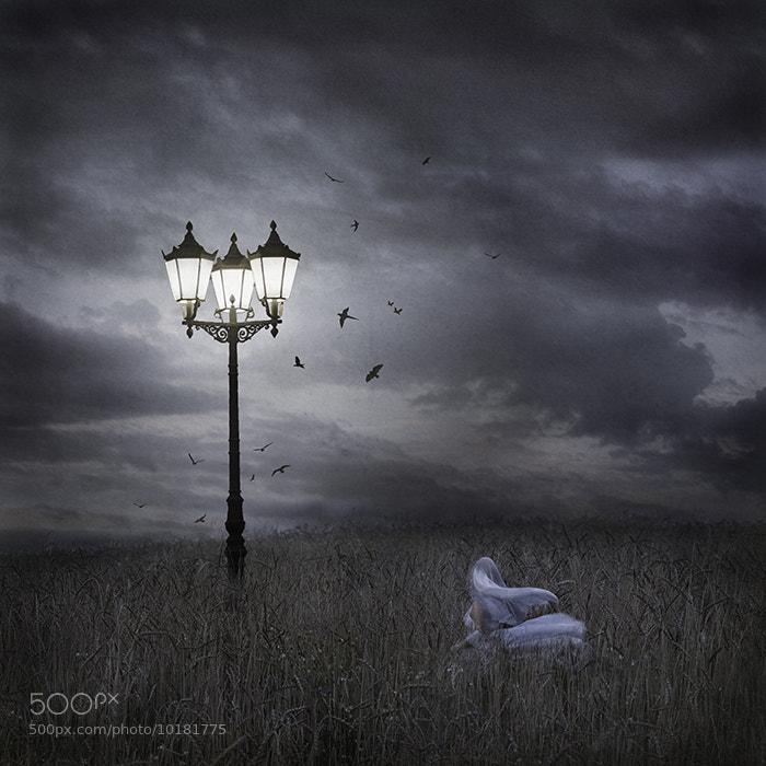Photograph the lantern by Lia Niobe on 500px
