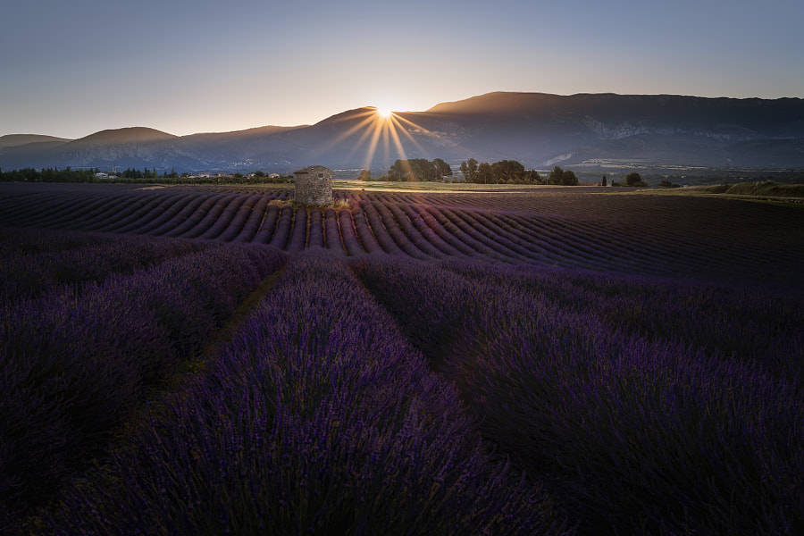DUFT DER PROVENCE... by Andreas Bobanac on 500px.com