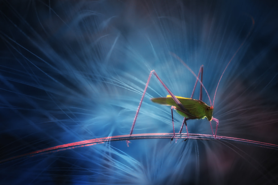 Photograph Party locust by Arief Perdana on 500px