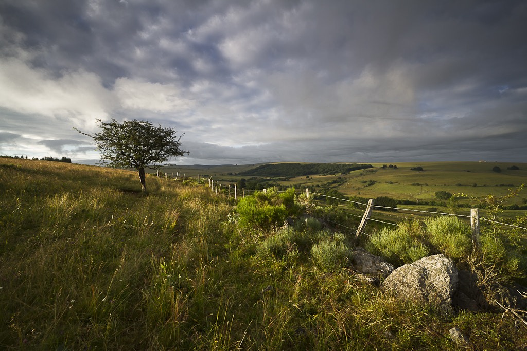 Photograph Solo dans les prés, Lacalm, Aubrac by PERRIN Gregory on 500px