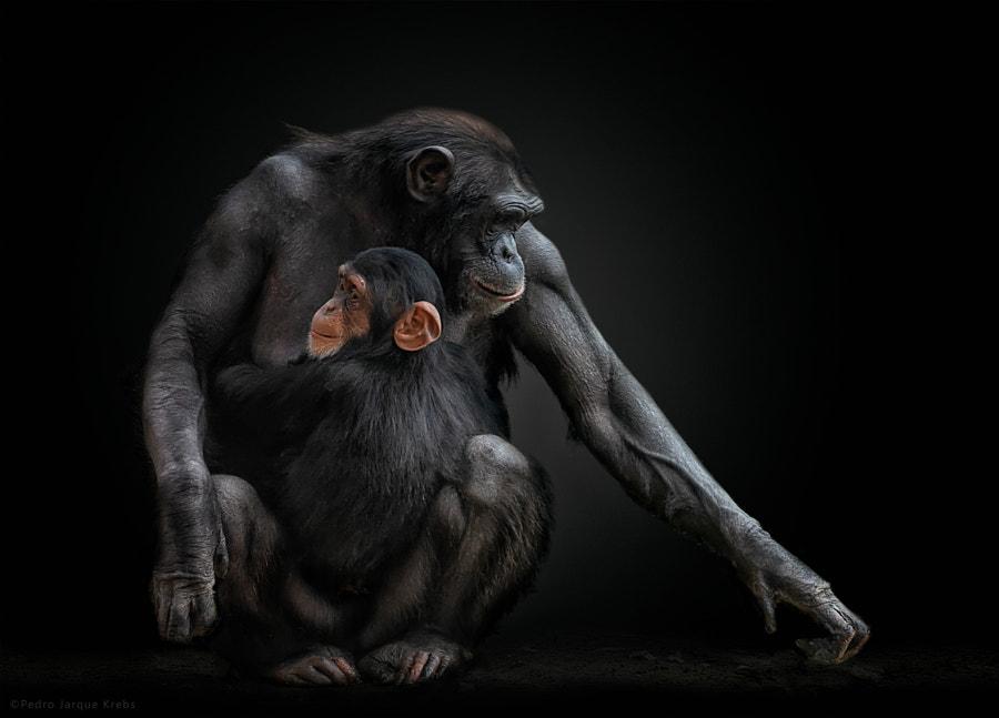 Happy World Chimpazee Day by Pedro Jarque Krebs on 500px.com