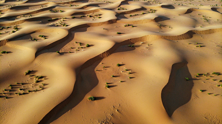 Dunes by Salem  Alforaih on 500px.com