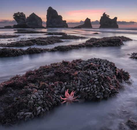 Coast of New Zealand by Sergey Aleshchenko
