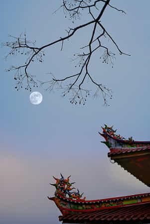 明月挂树梢 by 0596鹰
