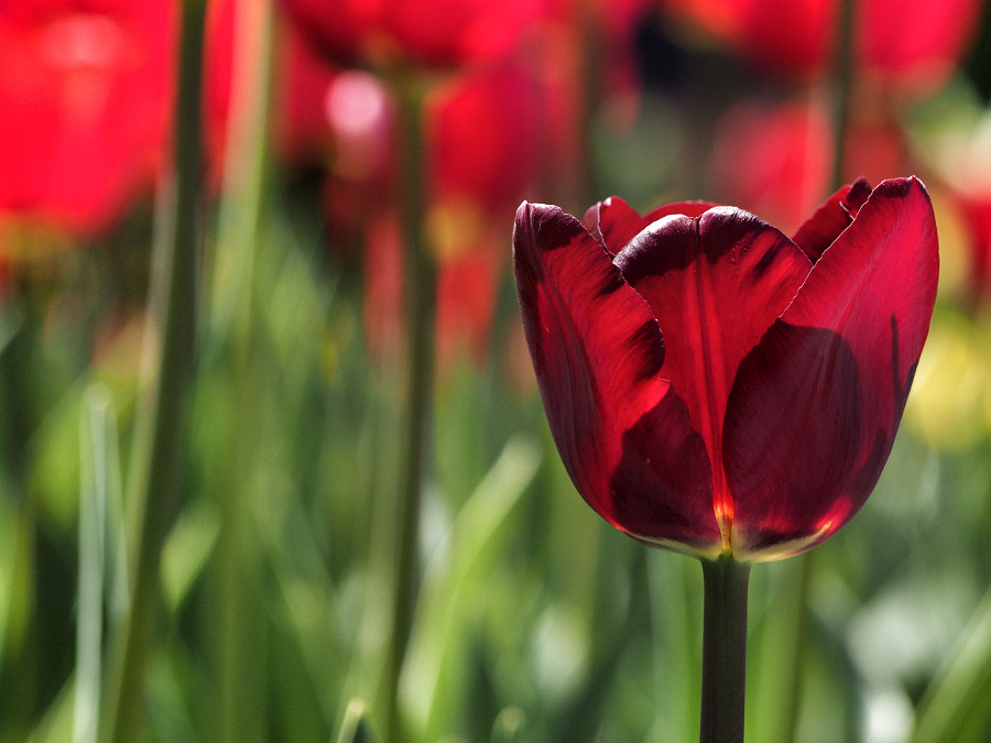 Photograph Red by Nancy Lundebjerg on 500px