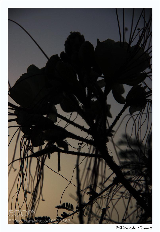 Photograph Siluetas by Ricardo GoMєz on 500px
