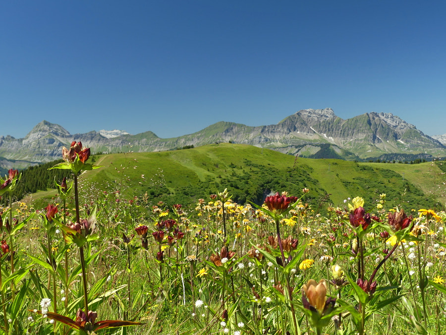 Summer Mountains colors by Yves LE LAYO on 500px.com