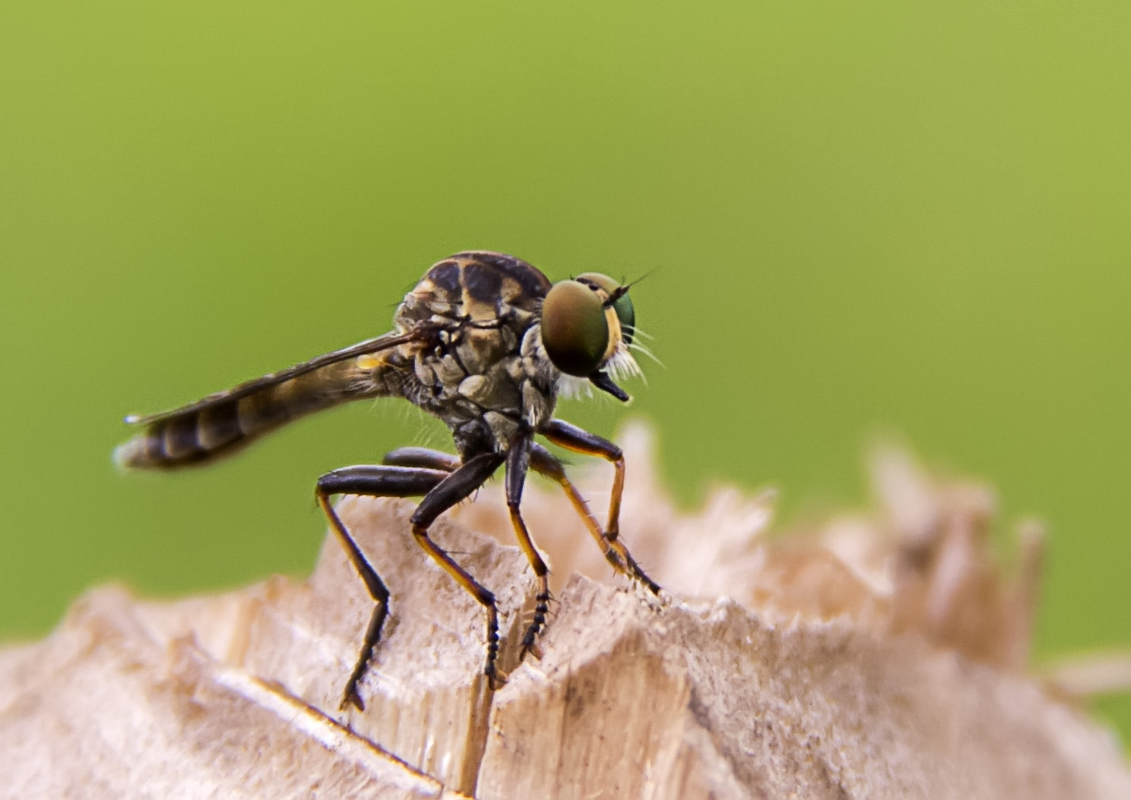 Photograph Bugs by Weiller :-) on 500px