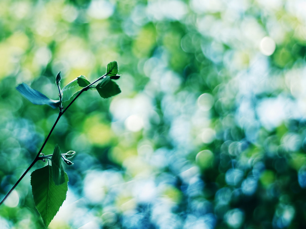 Photograph Green. by Maryl González on 500px