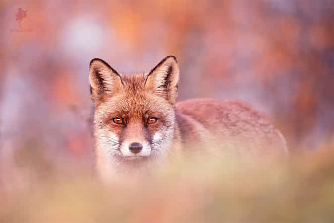 HypnotEyes by Roeselien Raimond