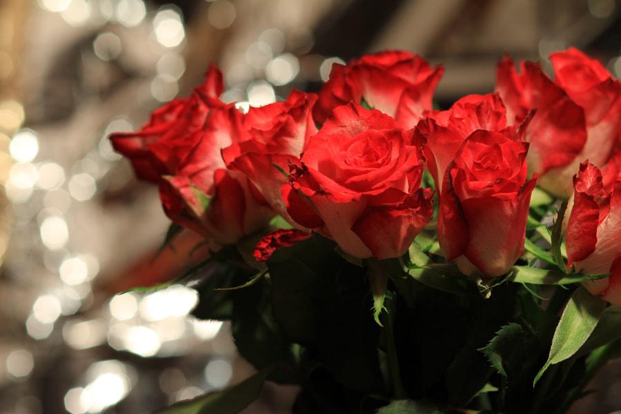 Bokeh Rose [II] by Reinhard Burkl / 500px | @500px