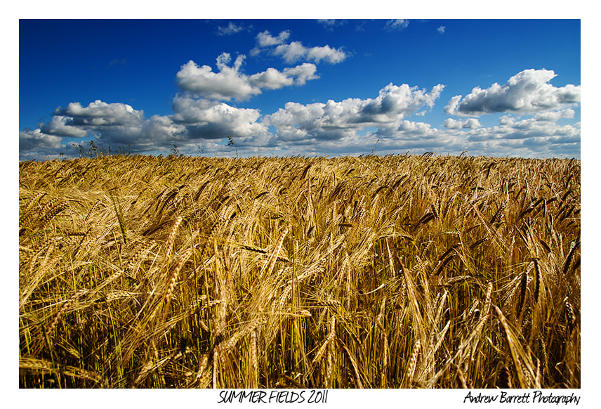 Photograph Summer Fields by Andrew Barrett on 500px