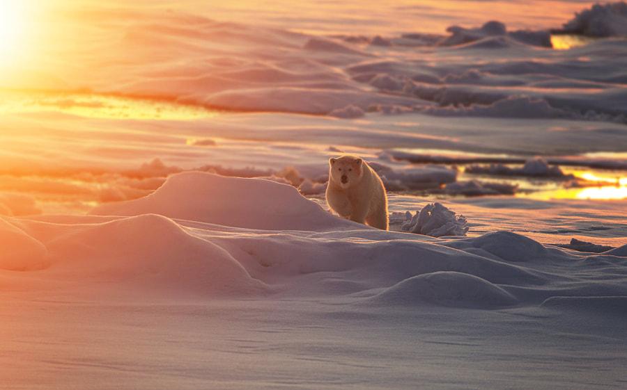 北极小熊 by 无双  on 500px.com