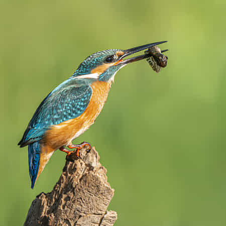 Common kingfisher by Boris Lichtman - 丨Vanechow Blog a No.1from shop.vanechow.com