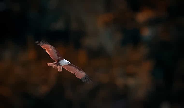 Eagle by Furqan Ali - 丨Vanechow Blog a No.1from shop.vanechow.com