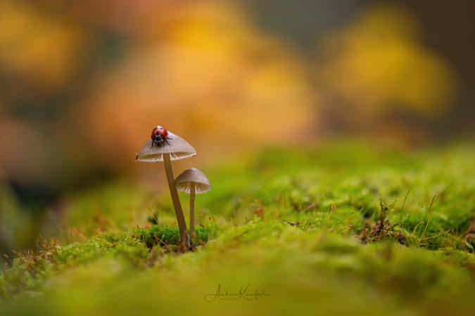 found in the forest by Anke Kneifel - 丨Vanechow Blog a No.1from shop.vanechow.com