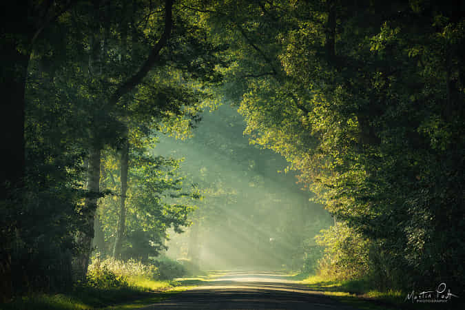 Welcome into the light by Martin Podt - 丨Vanechow Blog a No.1from shop.vanechow.com