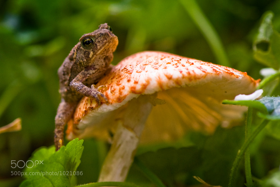 Toad relaxing on a mushroom in a forest