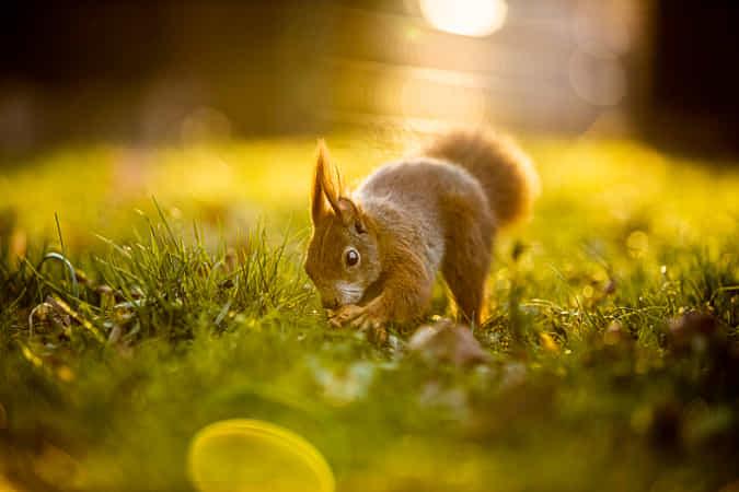 My nut! by Pawel Koyfman (EnterTheScape) - 丨Vanechow Blog a No.1from shop.vanechow.com