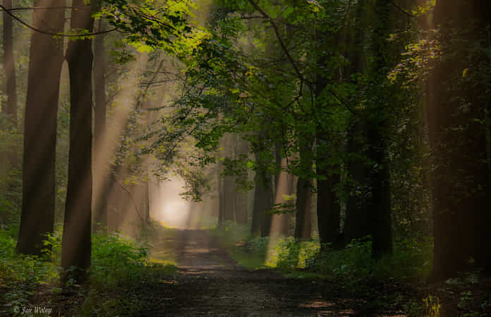Forest lights of summer morning - I by Jan Wolny - 丨Vanechow Blog a No.1from shop.vanechow.com