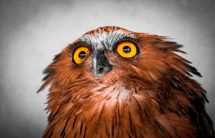 Big Eyes by Furqan Ali - 丨Vanechow Blog a No.1from shop.vanechow.com