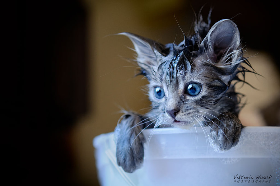 flea bath by Viktoria Haack on 500px.com