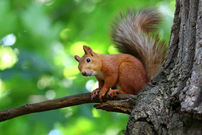 Squirrel. by Galina Jacyna - 丨Vanechow Blog a No.1from shop.vanechow.com