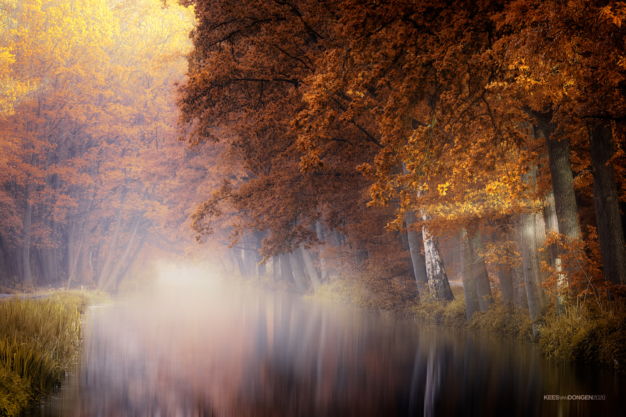 Dream in Color by Kees van Dongen on 500px.com