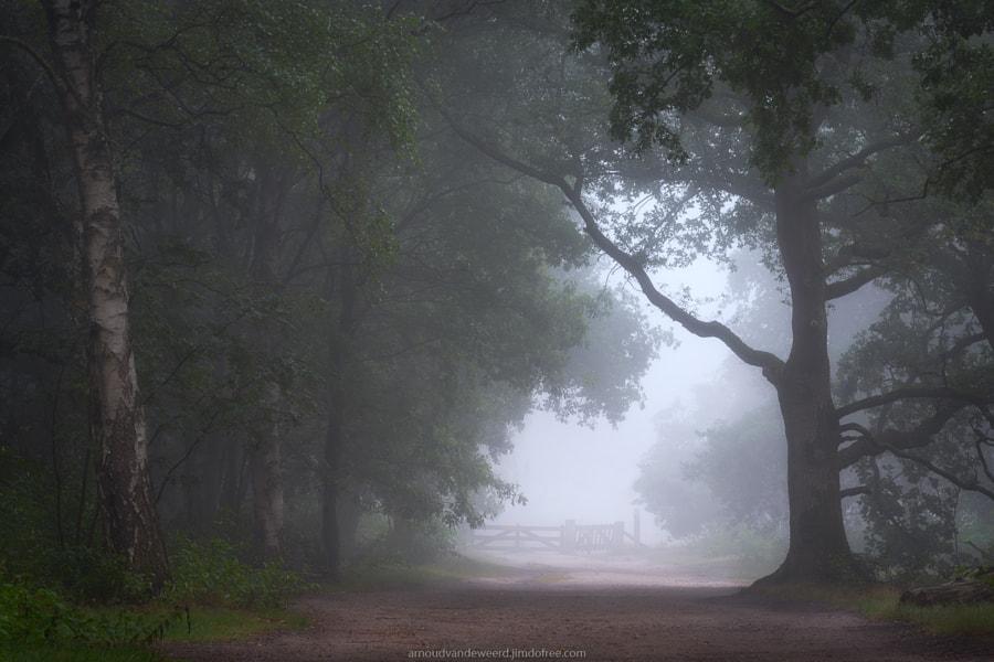Sound of Silence by Arnoud van de Weerd on 500px.com