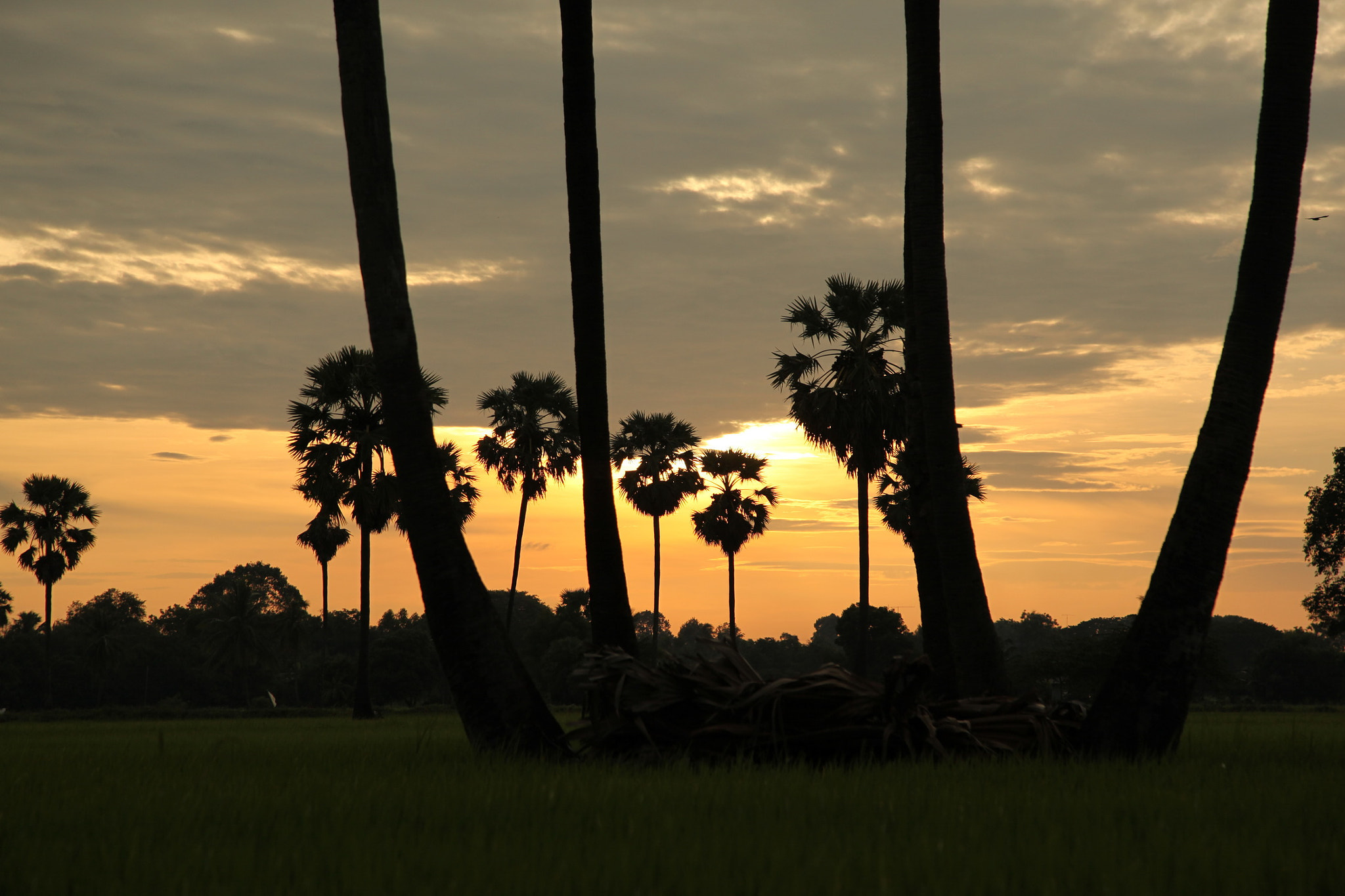Photograph Sunset&Palm tree by Thongchai Rodyoi on 500px