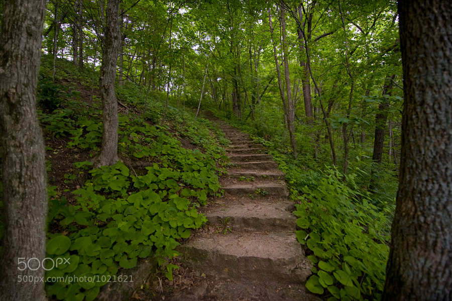 Stone path through the forest