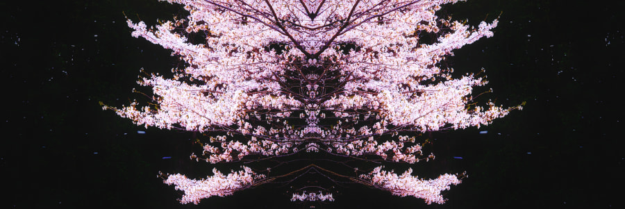 Madness of Sakura