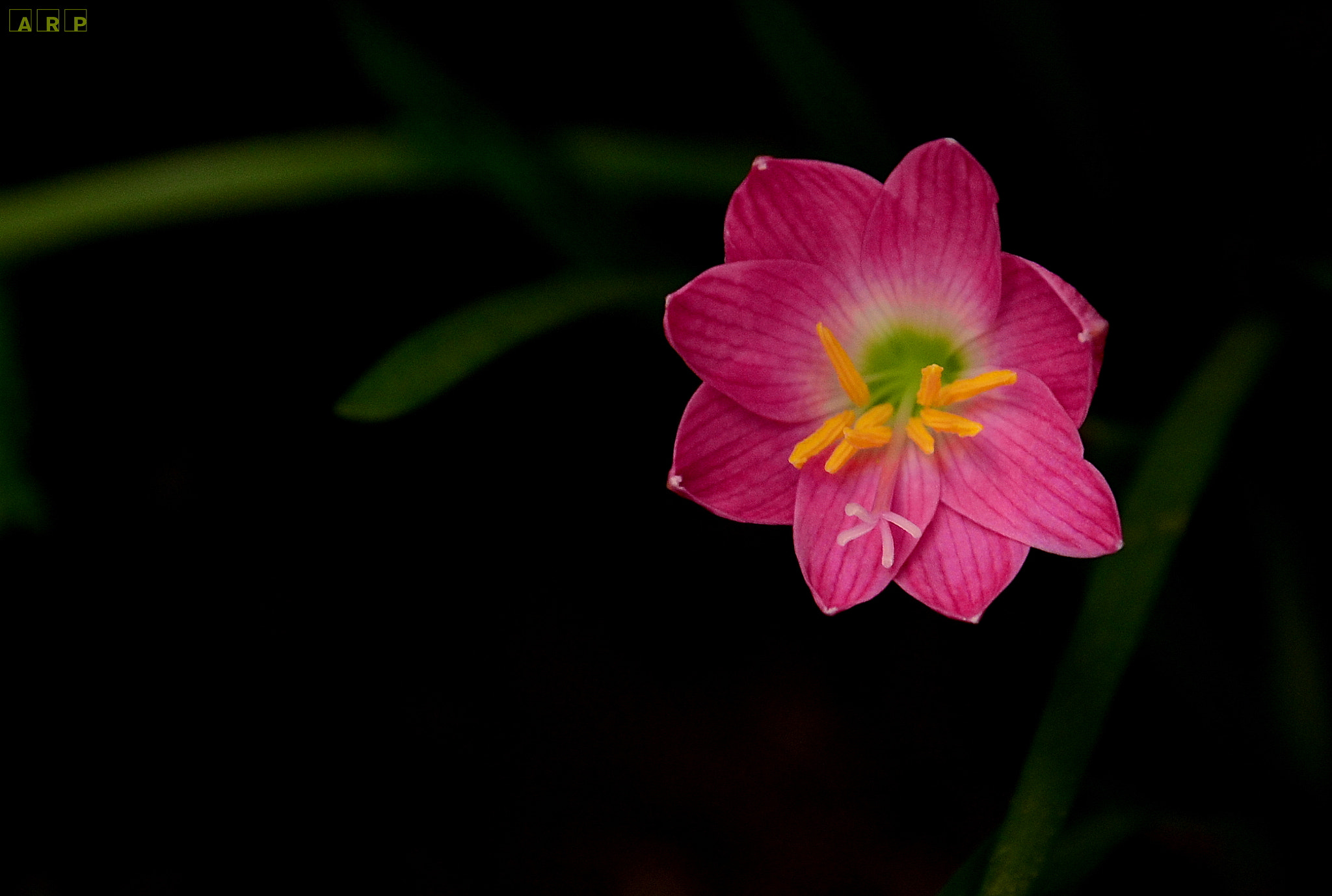 Photograph Beauty by Abhijit Ranade on 500px