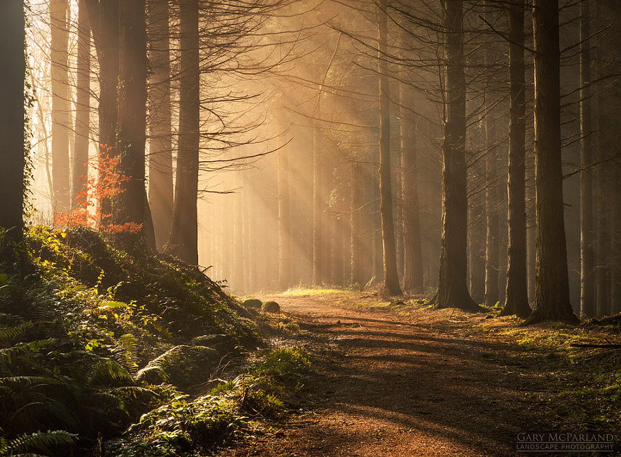 Early Morning Light by Gary McParland on 500px.com