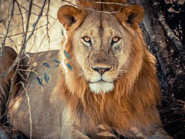 the King likes posing by Furqan Ali