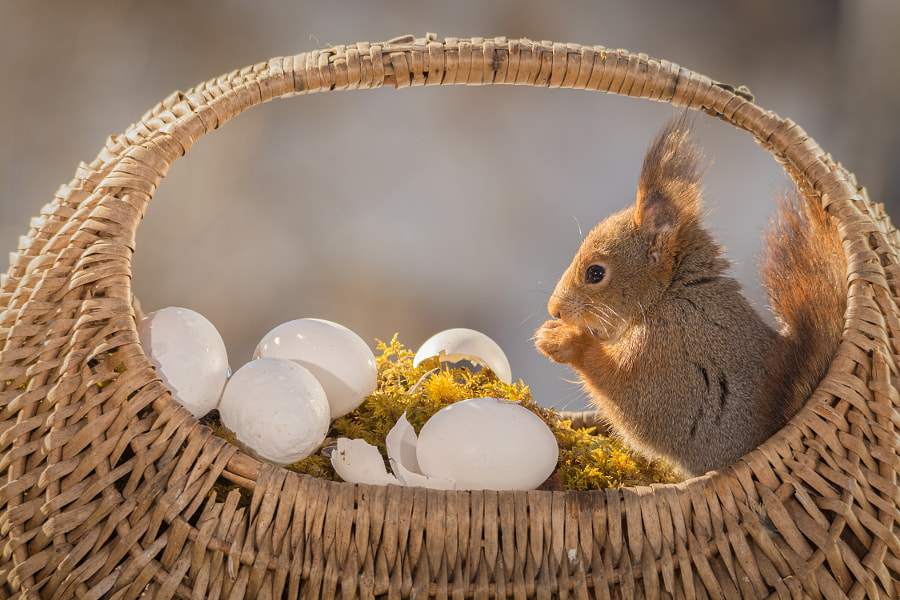 Photograph easter meal by Geert Weggen on 500px